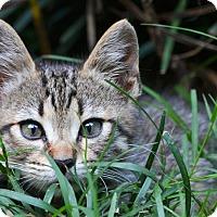Adopt A Pet :: Beatrice - Washington, GA
