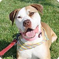 Adopt A Pet :: Lenora - Richmond, VA
