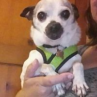 Adopt A Pet :: Kipper - Eugene, OR