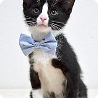 Adopt A Pet :: Firefly - Dublin, CA