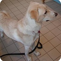 Adopt A Pet :: Blondie - Jackson, MI