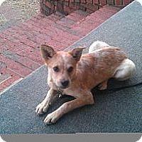 Adopt A Pet :: Jenny - Conway, AR