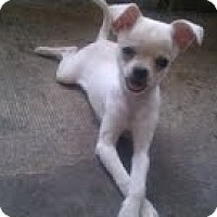 Adopt A Pet :: Snow - Jacksonville, FL