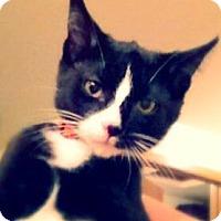 Adopt A Pet :: Rico - Green Bay, WI