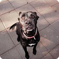 Adopt A Pet :: Annie - Silsbee, TX