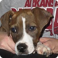 Adopt A Pet :: Little Mack - Salem, NH