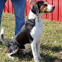 Adopt A Pet :: Ruccus - Joplin, MO