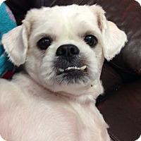 Adopt A Pet :: Mason - Oviedo, FL