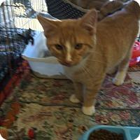 Adopt A Pet :: Adoption Special - Clay, NY