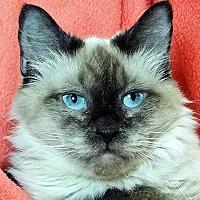 Adopt A Pet :: Dessa - Renfrew, PA