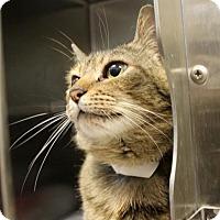 Adopt A Pet :: Mandolin - Richmond, VA