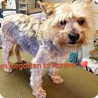 Adopt A Pet :: Stanley-ADOPTION PENDING - Boulder, CO