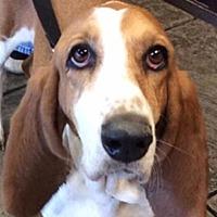 Adopt A Pet :: Daisy - Salt Lake City, UT