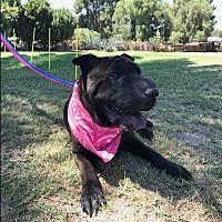Adopt A Pet :: Ivanka - Apple Valley, CA