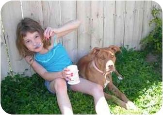 American Staffordshire Terrier Dog for adoption in Twin Falls, Idaho - Bella
