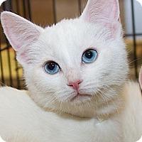 Adopt A Pet :: Palila - Irvine, CA