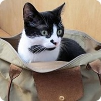 Adopt A Pet :: Condi - Kensington, MD