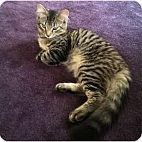 Adopt A Pet :: Prince - Quincy, MA