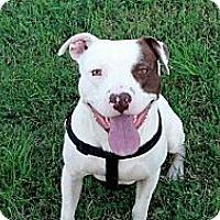 Adopt A Pet :: Chip - Blanchard, OK