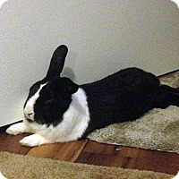 Adopt A Pet :: Pointdexter - Williston, FL