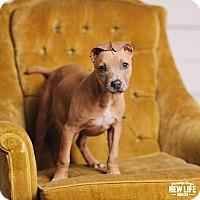 Adopt A Pet :: Mika - Portland, OR