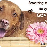 Adopt A Pet :: Sampson - West Hartford, CT