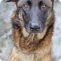 Adopt A Pet :: Willow - Inverness, FL