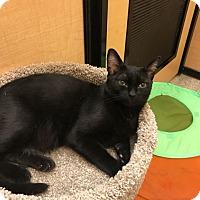 Adopt A Pet :: Steve - Scottsdale, AZ