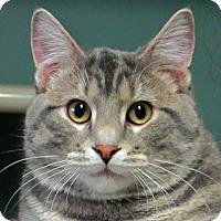 Adopt A Pet :: Reggie - Roseville, MN