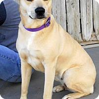 Adopt A Pet :: Alaina - Oskaloosa, IA