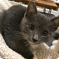 Adopt A Pet :: Bunny - Brooklyn, NY