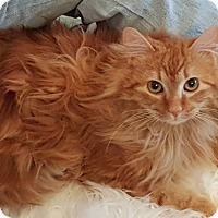 Adopt A Pet :: Bruce - Keller, TX
