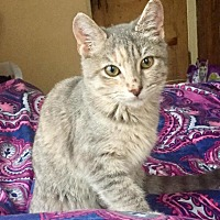 Adopt A Pet :: Roxy - Waggaman, LA