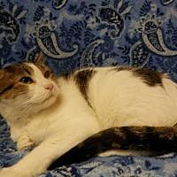 Adopt A Pet :: Mr. Blue Jeans - Tyler, TX