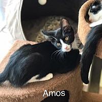 Adopt A Pet :: Amos - Island Park, NY