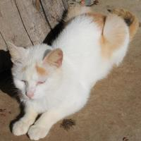 Adopt A Pet :: Lloyd - Robinson, IL