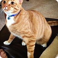Adopt A Pet :: GINGER & BOOGIE - Madison, AL