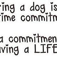 Adopt A Pet :: FOSTERS NEEDED - Boca Raton, FL