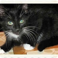 Adopt A Pet :: Bond - Catasauqua, PA
