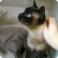 Adopt A Pet :: Coco - Riverhead, NY
