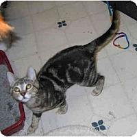 Adopt A Pet :: Helena - Davis, CA