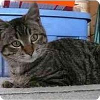 Adopt A Pet :: Captain - Strathmore, AB