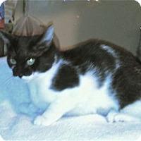 Adopt A Pet :: Deonne - Colorado Springs, CO