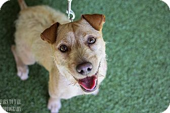 Terrier (Unknown Type, Small)/Shar Pei Mix Dog for adoption in Mission Viejo, California - Zoey