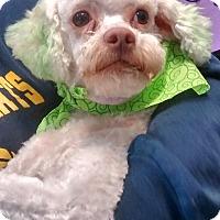Adopt A Pet :: Davey Baby - Woodland, CA