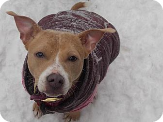Feist/Terrier (Unknown Type, Medium) Mix Dog for adoption in Cool Ridge, West Virginia - Maya