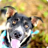 Adopt A Pet :: Rob - Muldrow, OK