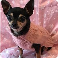 Adopt A Pet :: Lucy - Santa Monica, CA