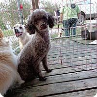 Adopt A Pet :: moca - Crump, TN