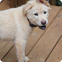 Adopt A Pet :: Mae - McDonough, GA